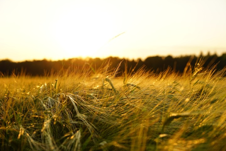 the gliding queen's harvest(poem)